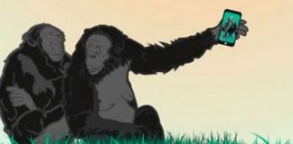 IV Edición Premios Bonobo