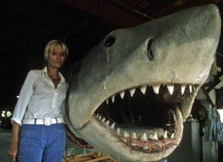 Jugando con tiburones
